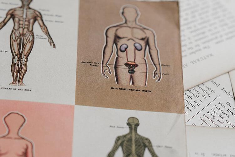 解剖学・生理学を学ぼう